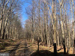 Bismarck Road/Lead Road, MOUNT STORM, WV 26739 (#WVGT103382) :: The Redux Group