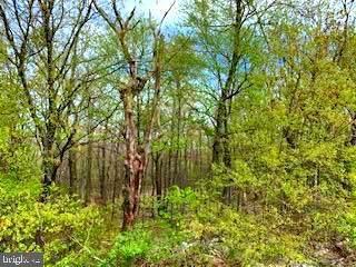 0 Timber Ridge Trail - Photo 1