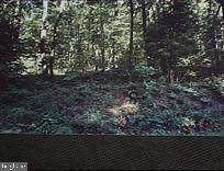 0 Buck Road, DOVER, PA 17315 (#PAYK155058) :: Flinchbaugh & Associates