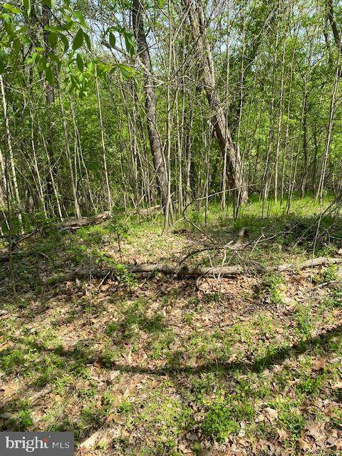 Calmes Neck Lane, Lot 76, BOYCE, VA 22620 (#VACL112330) :: AJ Team Realty