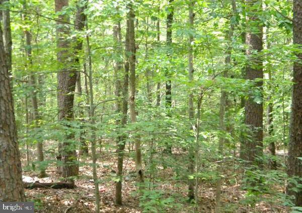 LOT 646 Dogwood Dr, LOUISA, VA 23093 (#VALA2000006) :: Network Realty Group