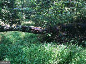 53.5 AC Off Timber Ridge Rd - Photo 1