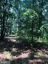 53.5 AC Off Timber Ridge Rd - Photo 14