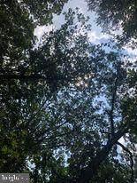 53.5 AC Off Timber Ridge Rd - Photo 20