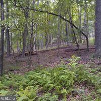 LOT B-78 Timber Line, LOST RIVER, WV 26810 (#WVHD2000138) :: Bic DeCaro & Associates
