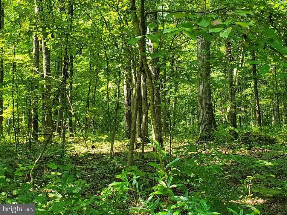 Swamp Poodle - Photo 1