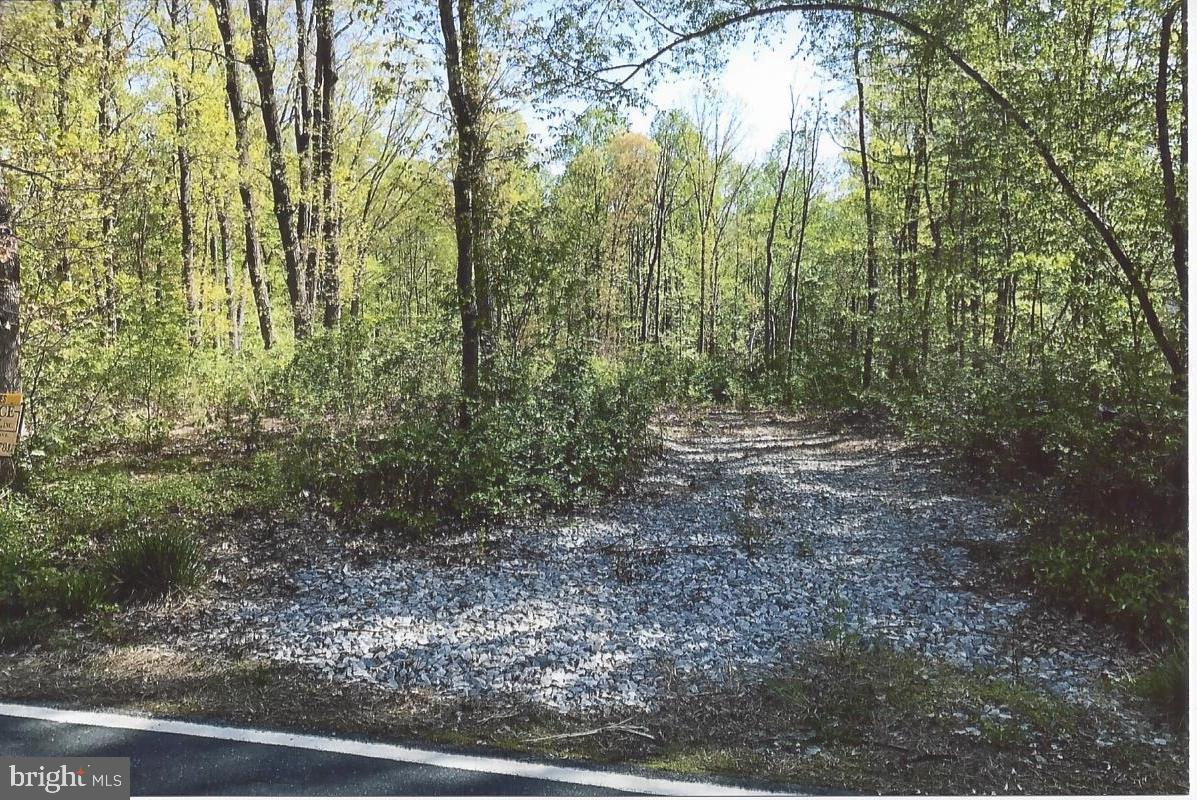 Lot #1, Valley Forge Bailiff Road - Photo 1