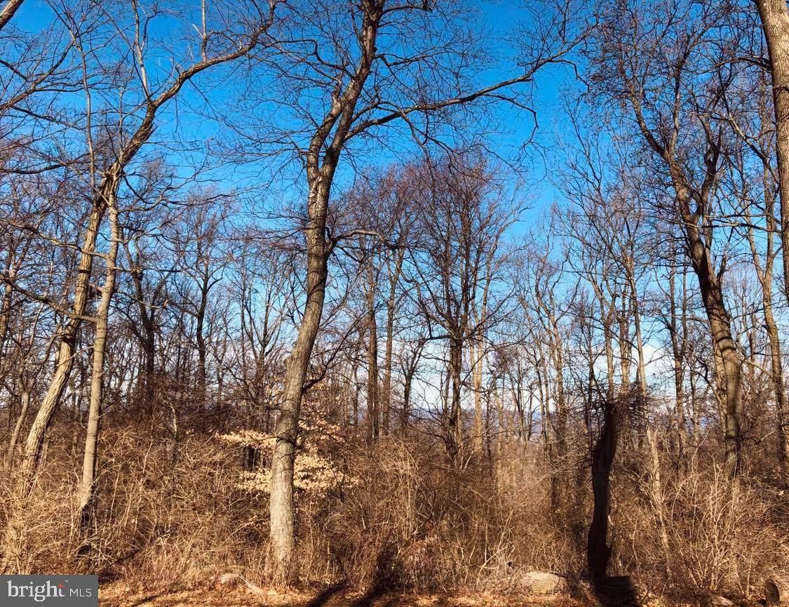 425 Texter Mountain Road - Photo 1