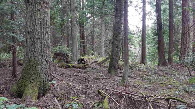 150 Rainsford Road, Galiano Island, BC V0N 1P0 (#R2395033) :: Vancouver Real Estate