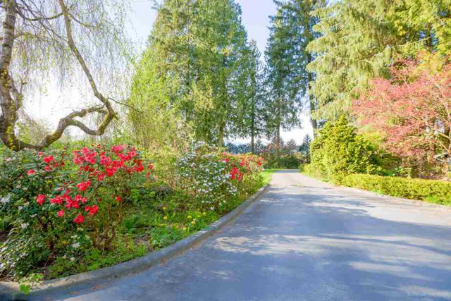 22050 136 Avenue, Maple Ridge, BC V4R 2P7 (#R2392256) :: RE/MAX City Realty