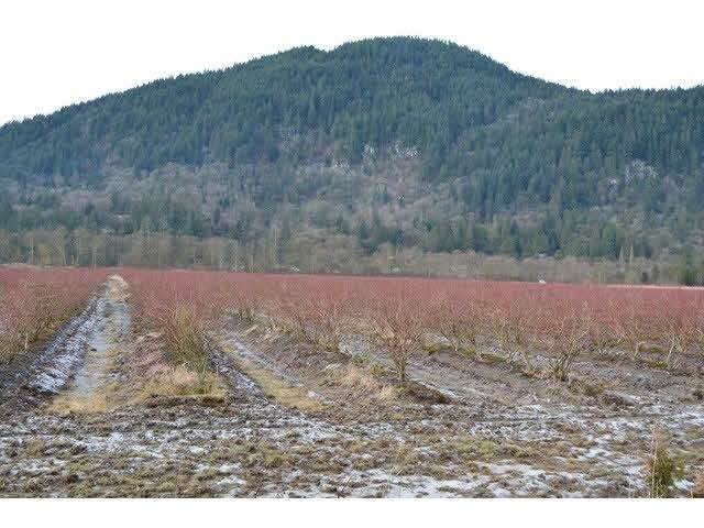 11383 Farms Road, Mission, BC V2V 4J1 (#R2540917) :: Macdonald Realty