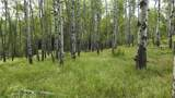 43 Acres Bordering Kananaskis - Photo 3