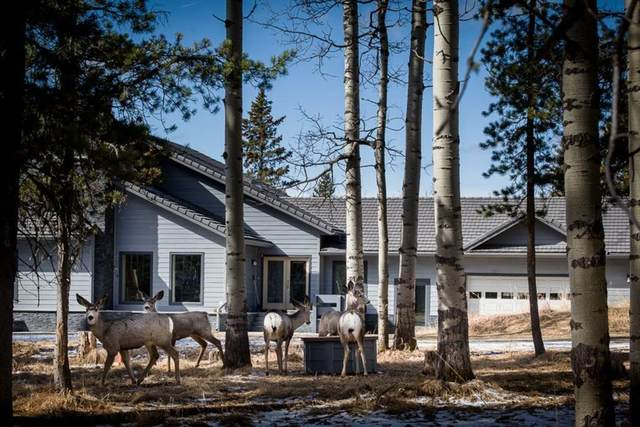 52057 Twp Rd 283A Township, Rural Rocky View County, AB T4C 1A1 (#A1022638) :: Calgary Homefinders