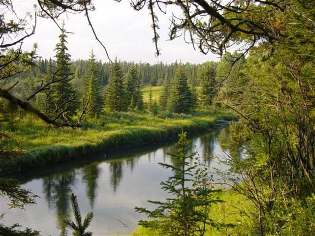 Fallen Timber, Rural Bighorn M.D., AB T0M 0R0 (#A1119330) :: Greater Calgary Real Estate