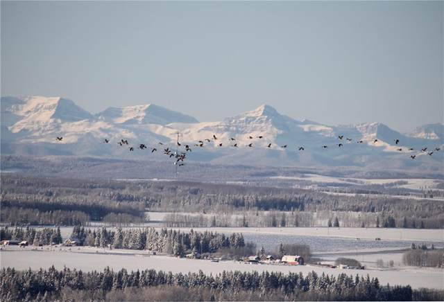 Address Not Published, Rural Mountain View County, AB T0M 1X0 (#C4297427) :: Virtu Real Estate
