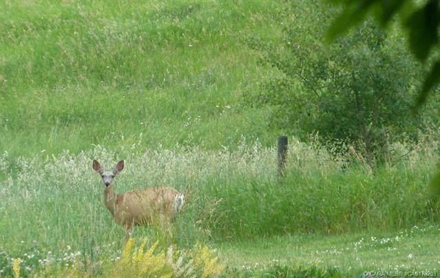 420069 Range Road 284 #13, Rural Ponoka County, AB T4J 1R3 (#A1042400) :: Canmore & Banff