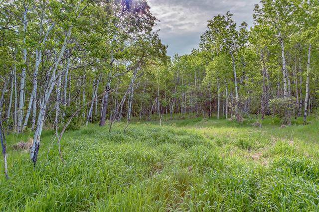 56 Stonewood Dale, Rural Rocky View County, AB T3Z 3M8 (#A1105003) :: Redline Real Estate Group Inc