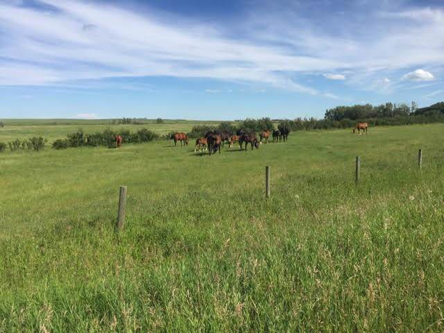 HWY 1 Rr240, Rural Wheatland County, AB T0J 3G0 (#C4273632) :: Virtu Real Estate