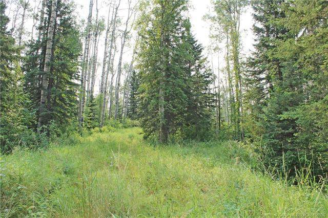 5 Sandhills Drive, Rural Clearwater County, AB T4T 2A4 (#CA0158926) :: Canmore & Banff