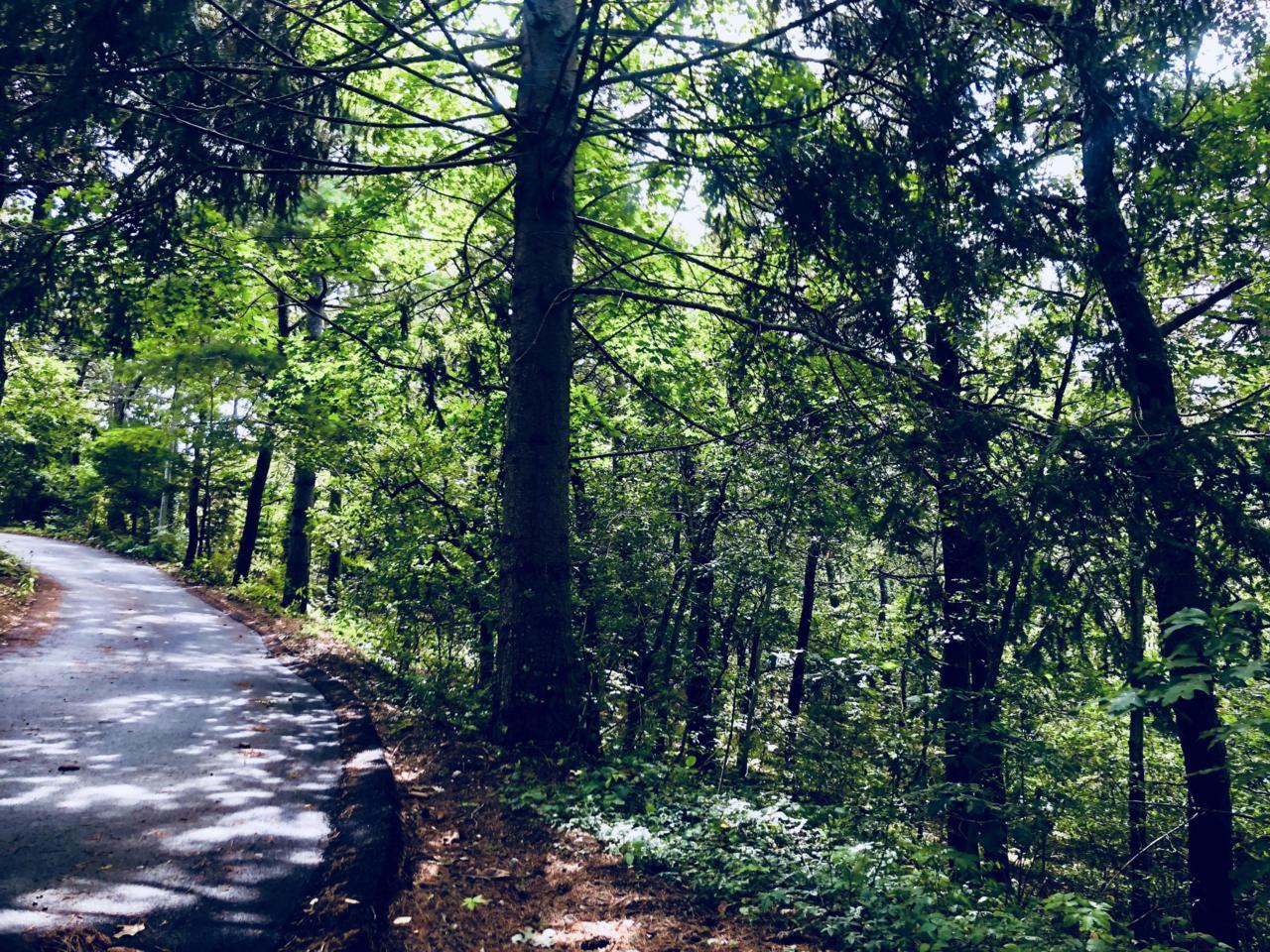 0 Evergreen Lane - Photo 1