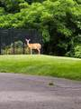 295 Wauquanesit Drive - Photo 24