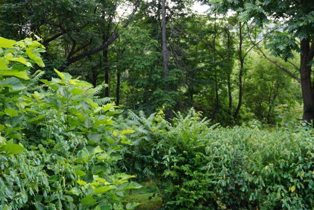 Enders Av, Schoharie, NY 12092 (MLS #201926926) :: Picket Fence Properties