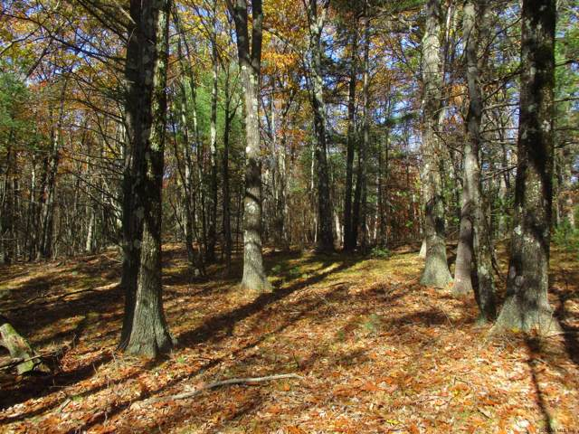 Truesdale Hill Rd, Lake George, NY 12845 (MLS #201934093) :: Picket Fence Properties