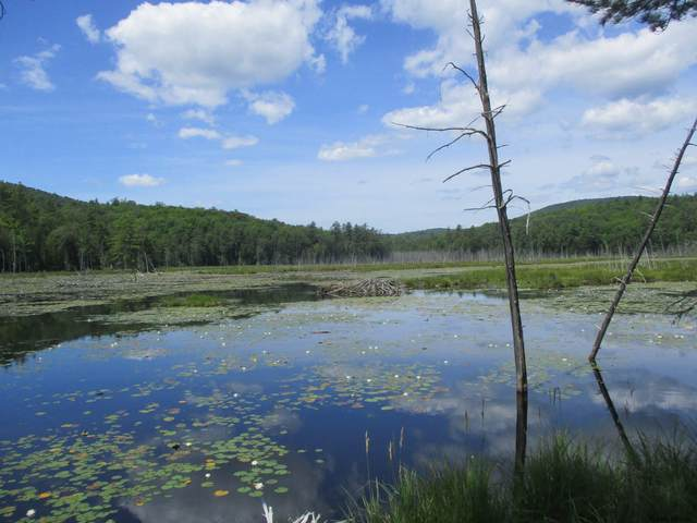 Charley Hill Rd, Schroon Lake, NY 12870 (MLS #202025994) :: 518Realty.com Inc