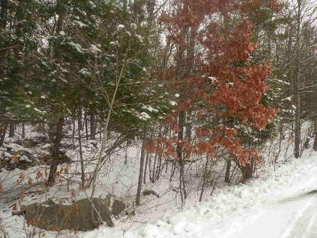 Potic Mountain Rd, Coxsackie, NY 12051 (MLS #201914486) :: Victoria M Gettings Team