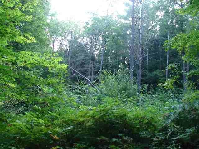 5727 State Highway 29, Saint Johnsville, NY 13452 (MLS #201924644) :: Picket Fence Properties