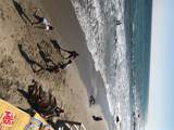 20810 Pacific Coast Hwy - Photo 19