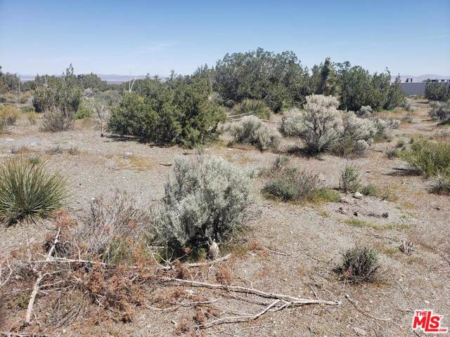 2770 White Fox Trail, Phelan, CA 92371 (#20541094) :: Randy Plaice and Associates