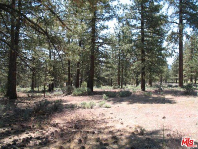 0 Schaffer Rd, Frazier Park, CA 93225 (#18306456) :: Lydia Gable Realty Group