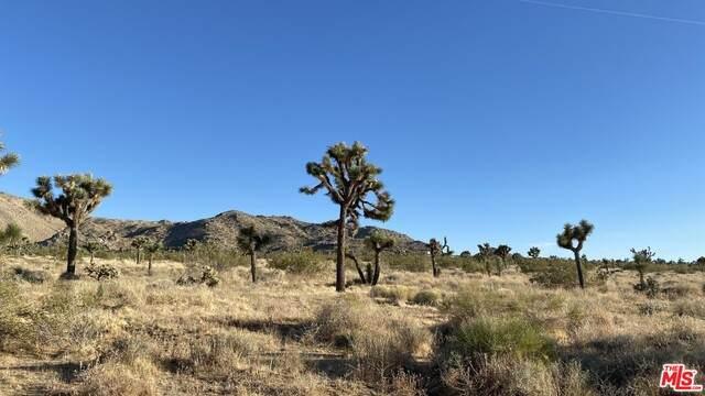 59653 Alta Loma Dr, Joshua Tree, CA 92252 (#21-685206) :: The Grillo Group