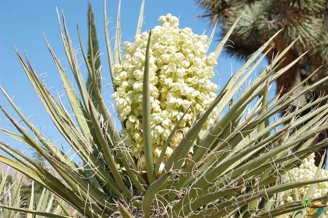 0 La Crescenta, Yucca Valley, CA 92284 (#21-748502) :: Angelo Fierro Group | Compass