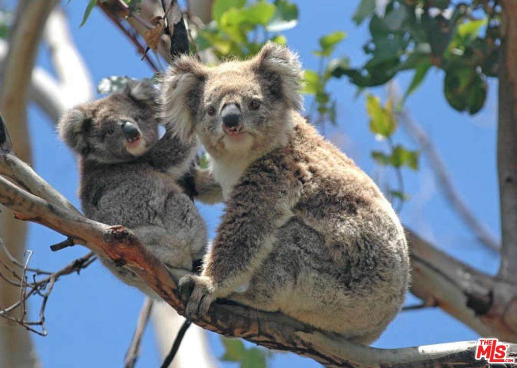 91 Bullock Rd French Island Australia - Photo 1