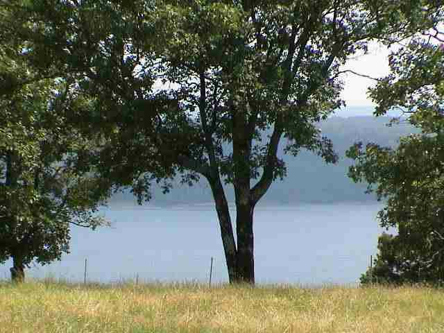 9 Honeysuckle, Quitman, AR 72131 (MLS #10160304) :: United Country Real Estate
