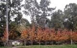 Lot 8 Oak Ridge Drive - Photo 1
