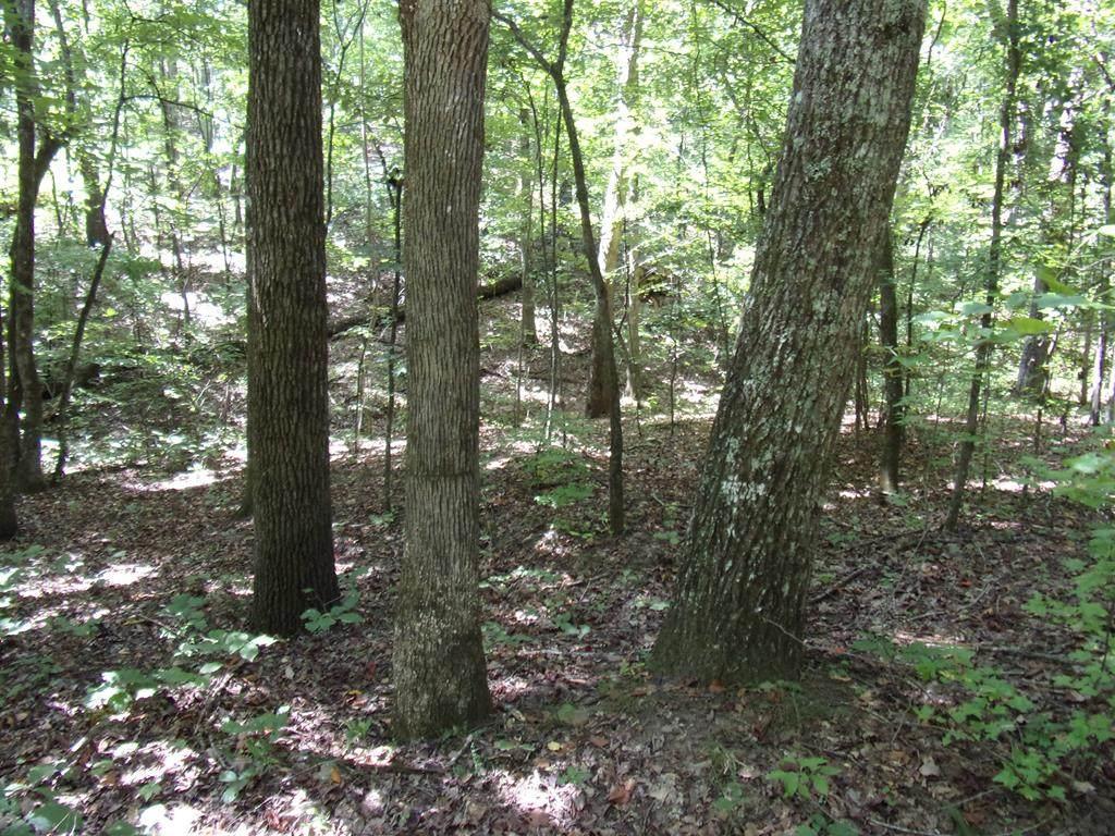 Lot 9, Blk 38 Oak Mountain Estates - Photo 1