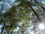 Lot 7 Shadow Moss Ln. - Photo 5