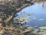 1837 Wood Stork Dr. - Photo 10