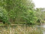 144 Beaver Pond Loop - Photo 8