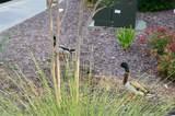 6203 Catalina Dr. - Photo 35