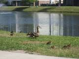 4812 Magnolia Lake Dr. - Photo 6