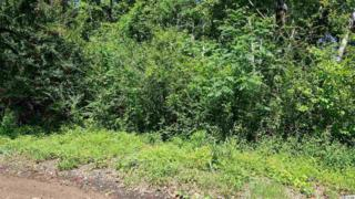 Lot 4 Yale Place, Pawleys Island, SC 29585 (MLS #1711784) :: James W. Smith Real Estate Co.