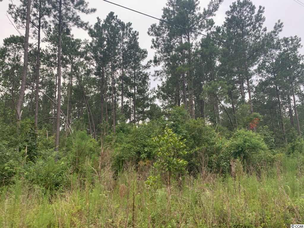 45.3 acre Old Cemetary Rd. - Photo 1
