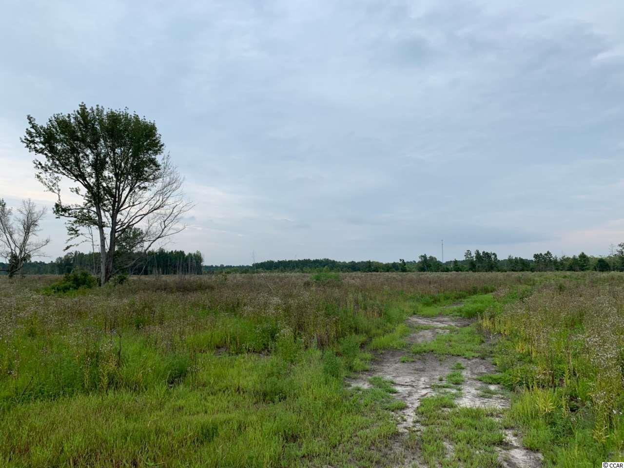 65 acres Sims Reach Rd. - Photo 1