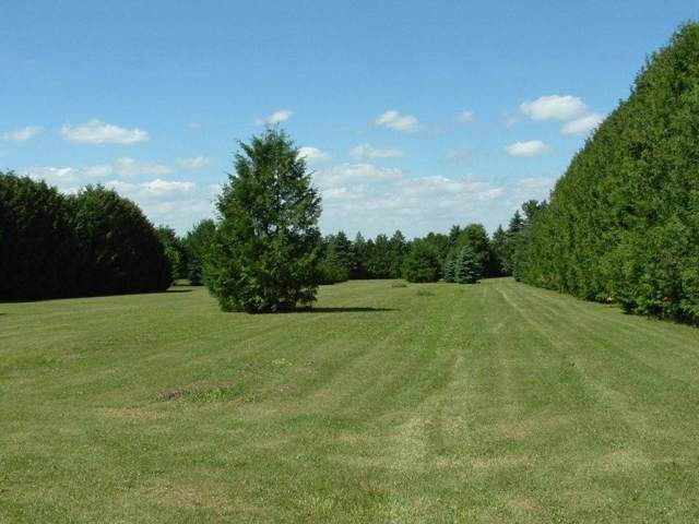 Address Not Published, Cresco, IA 52136 (MLS #20196036) :: Amy Wienands Real Estate