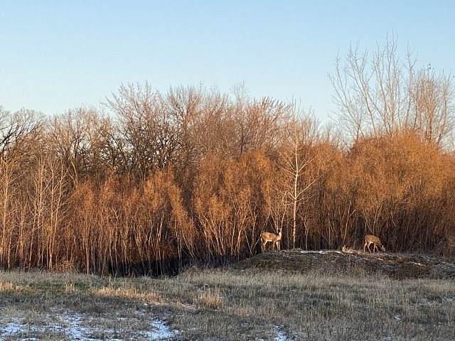 419 Meadow Lane - Photo 1
