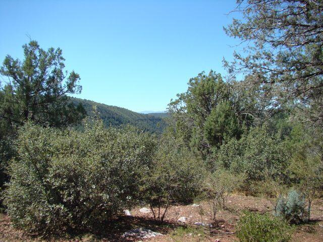 000 Fire Control Road, Pine, AZ 85544 (MLS #84978) :: Walters Realty Group